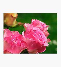 Raindrops on Roses..... Photographic Print