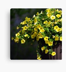 Yellow hanging basket .. Canvas Print