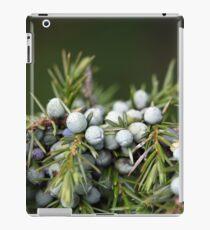 Juniperus berries on a tree iPad Case/Skin