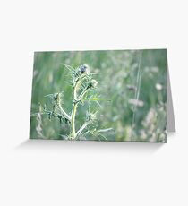 Spring Sunset on Bull Thistle Greeting Card
