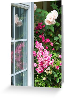 Peek-A-Boo Roses by Tracy Riddell