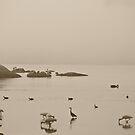 Wilson Inlet Birds 2014  by pennyswork