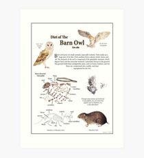 Diet of the Barn Owl Art Print