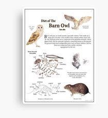 Diet of the Barn Owl Canvas Print