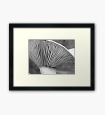 Saffron gills (black/white) Framed Print