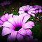*Daisy Family - Gorgeous Flower Cards*