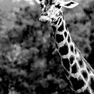 Giraffe No.4 by Erin Davis