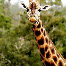 Giraffe No.5 by Erin Davis