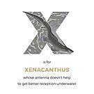 X is for Xenacanthus by Franz Anthony