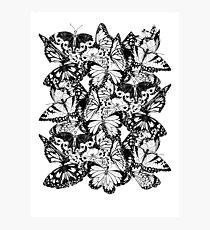 Flutter - Fineliner Illustration Photographic Print