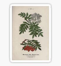 Wayside and woodland blossoms a pocket guide to British wild flowers for the country rambler  by Edward Step 1895 117 Mountain Ash Rowan Tree Sticker