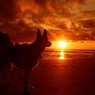 Everything's Beachy. by Tibbs