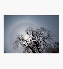 Sun Halo, Trees And Silver Gray Winter Sky Photographic Print