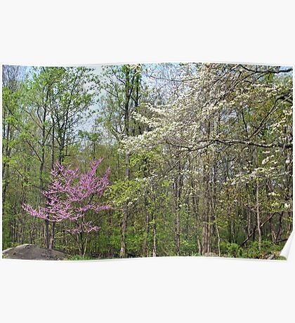 Springtime In The Woods Poster