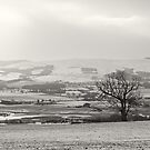 Ochils by Tim Haynes