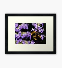 Bumble Bee At Dusk Framed Print