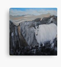 Mountain Goat High in the Rocky Mountains Canvas Print