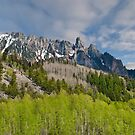 Aspen Grove Below the Ophir Needles by Jeff Goulden