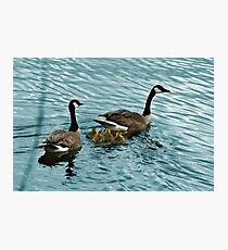 Pair of Adult Canada Geese with Goslings Photographic Print