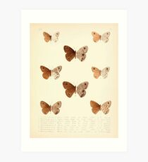 Aid to the identification of insects Charles Owen Waterhouse 1890 V1 V2 178 Various Art Print