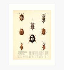 Aid to the identification of insects Charles Owen Waterhouse 1890 V1 V2 133 Various Art Print