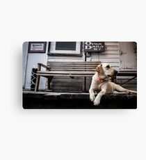 The Country Store Dog Canvas Print