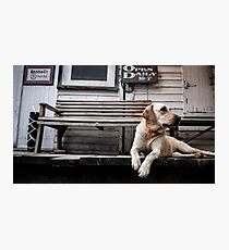 The Country Store Dog Photographic Print