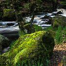 Burbage Brook in May by John Dunbar