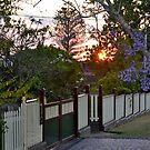 Jacaranda Sunset by Gary Kelly