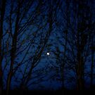 Sky at night... by shelleybabe2