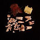 Dental History by Barbara Morrison