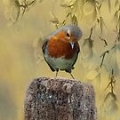 Robin Bird by David Dehner