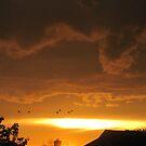 Flight at Sunset von sunsetgirl