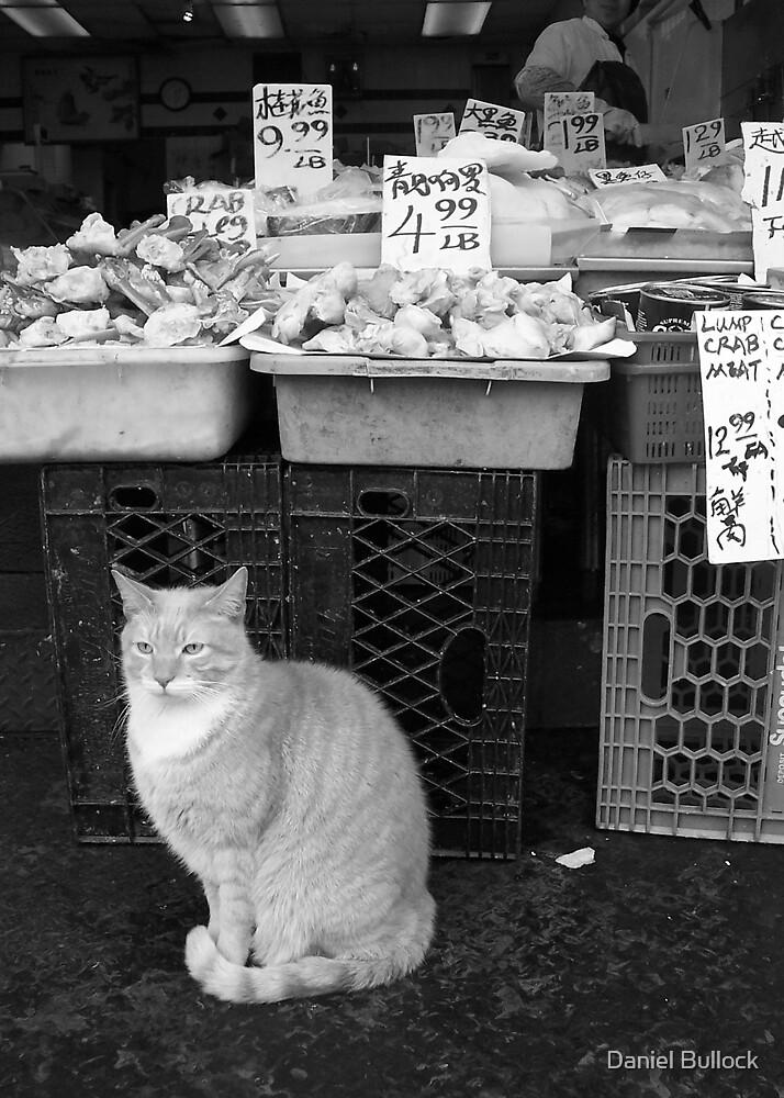 Fishmarket Cat by Daniel Bullock