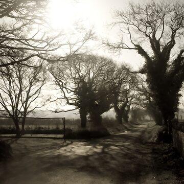 Irish Country Road by macstrat