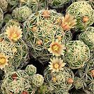 Pretty Prickly by RichCaspian