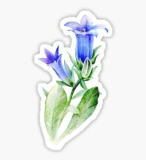 Campanula blue bell flower watercolor Sticker