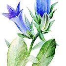 Campanula blue bell flower watercolor by Sarah Trett