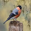 Bullfinch Bird by David Dehner