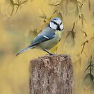 Blue Tit Bird II by David Dehner