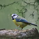 Blue Tit Bird by David Dehner