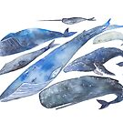 Whales by permare