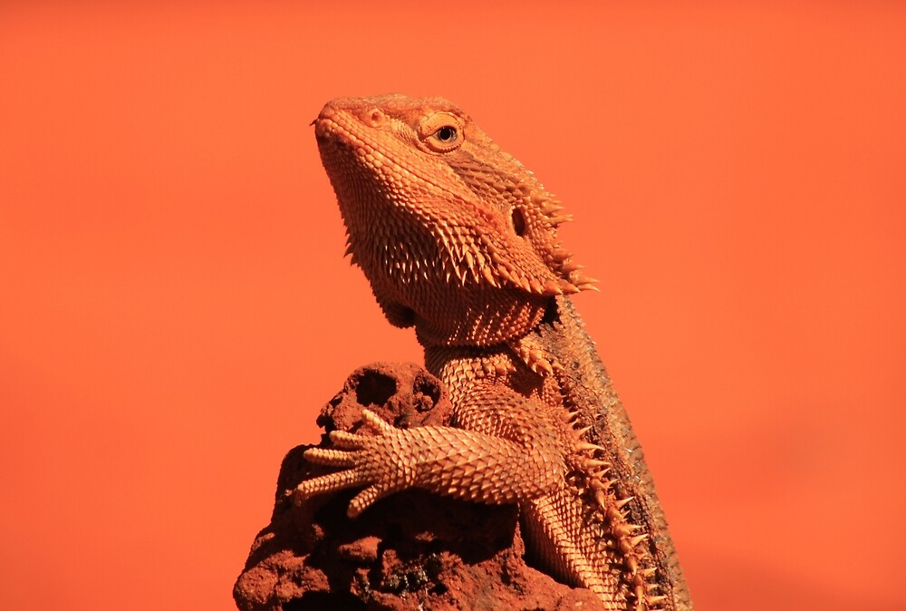 Bearded Dragon by Ursula Rodgers