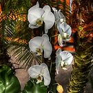 White Orchids by Kathy Baccari