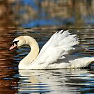 Graceful Swan by Kathy Baccari