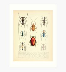 Aid to the identification of insects Charles Owen Waterhouse 1890 V1 V2 179 Various Art Print