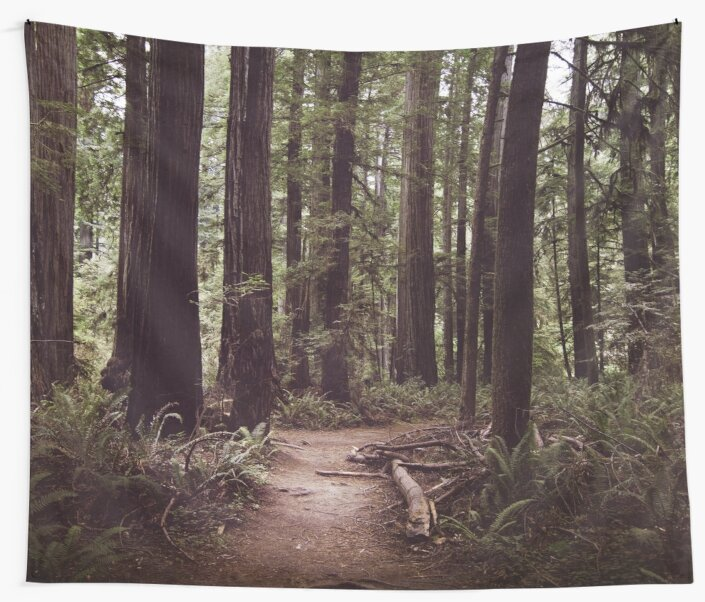 Redwood Forest by LawsonImages