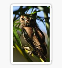 Eastern Screech Owl, As Is Sticker