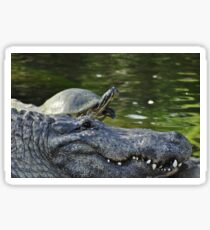 Alligator and Turtle, As Is Sticker