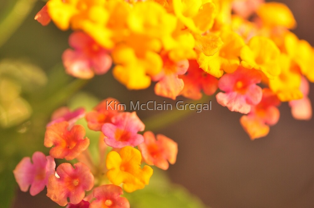 Lantana, As Is by Kim McClain Gregal